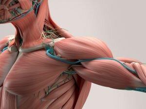 Göğüs Kaslarınızı Patlatıp, Metabolizmanızı Ateşleyecek Egzersiz Hareketleri